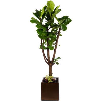 떡갈나무 [premium]