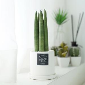 공기정화 반려식물 스투키 플렌테리어